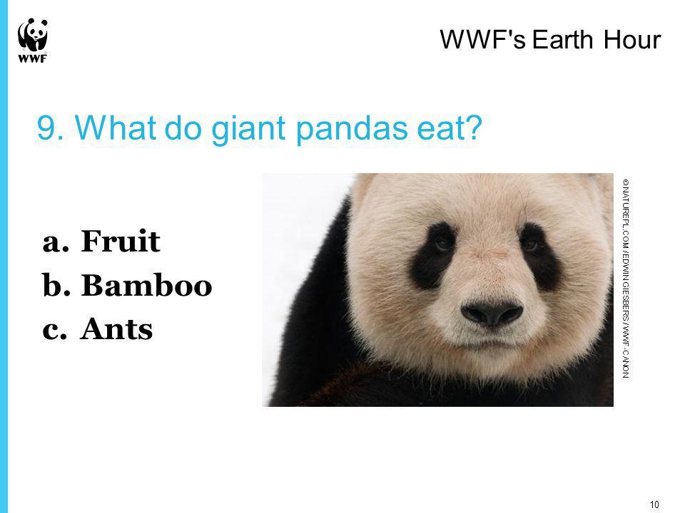 9. What do giant pandas eat.