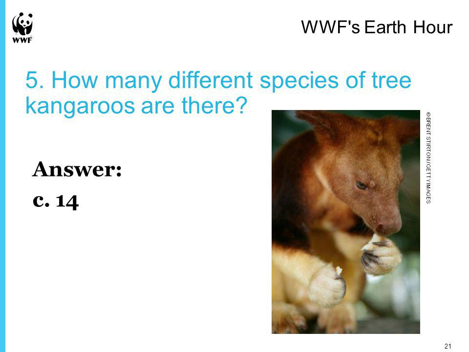 5. How many different species of tree kangaroos are there.