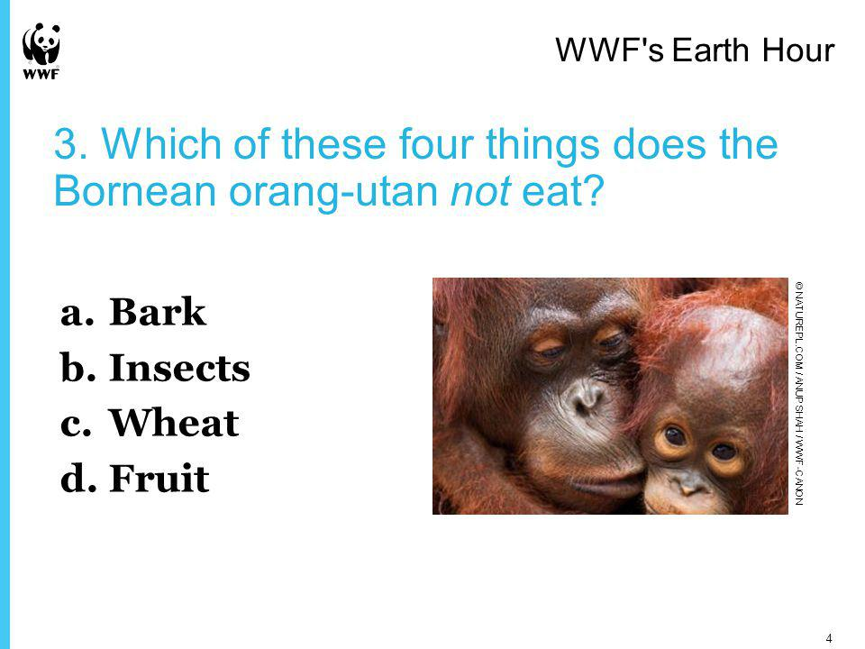 3. Which of these four things does the Bornean orang-utan not eat.