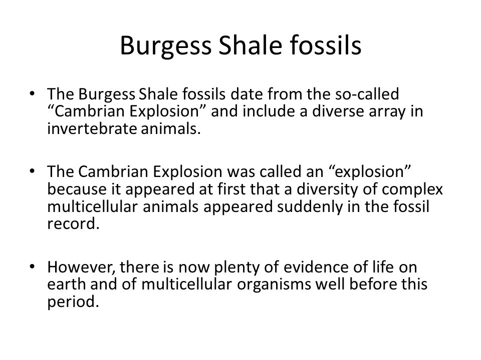 Burgess Shale fossils The Burgess Shale fossils date from the so-called Cambrian Explosion and include a diverse array in invertebrate animals.