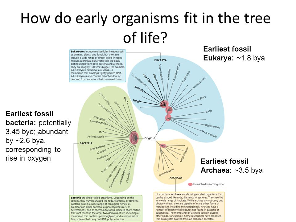 How do early organisms fit in the tree of life.