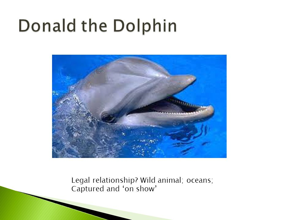 Legal relationship Wild animal; oceans; Captured and 'on show'