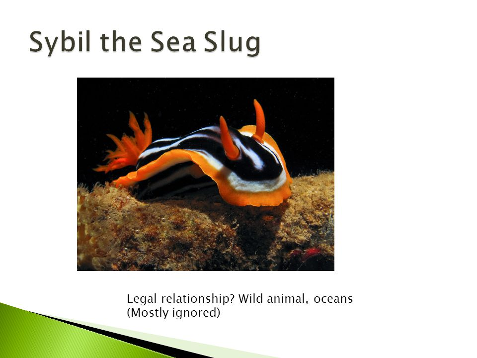 Legal relationship Wild animal, oceans (Mostly ignored)