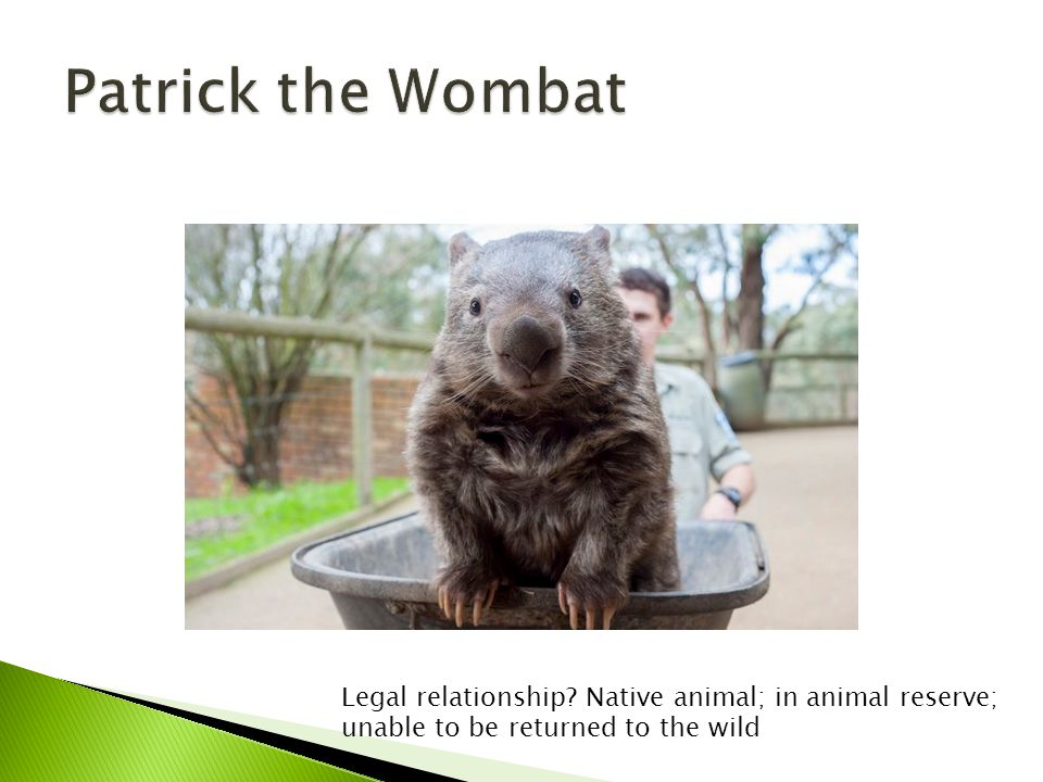 Legal relationship Native animal; in animal reserve; unable to be returned to the wild