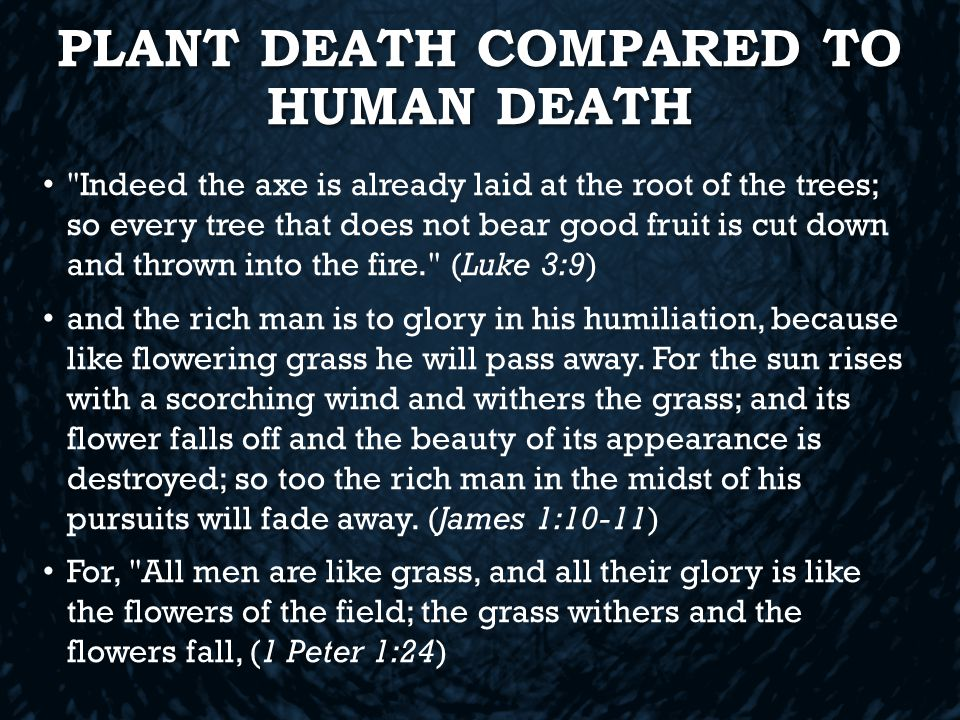 PLANT DEATH COMPARED TO HUMAN DEATH Indeed the axe is already laid at the root of the trees; so every tree that does not bear good fruit is cut down and thrown into the fire. (Luke 3:9) and the rich man is to glory in his humiliation, because like flowering grass he will pass away.