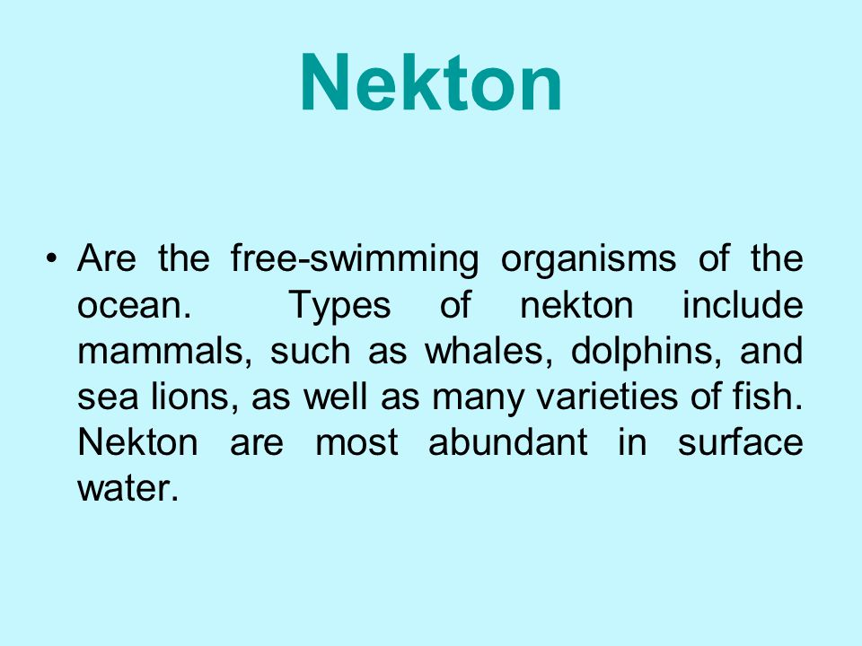 Plankton Are organisms that float at or near the ocean's surface. Most plankton are microscopic. Plankton are subdivided into two groups – those that