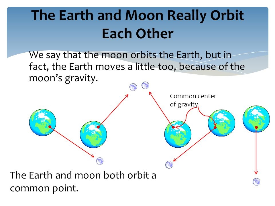 We say that the moon orbits the Earth, but in fact, the Earth moves a little too, because of the moon's gravity.