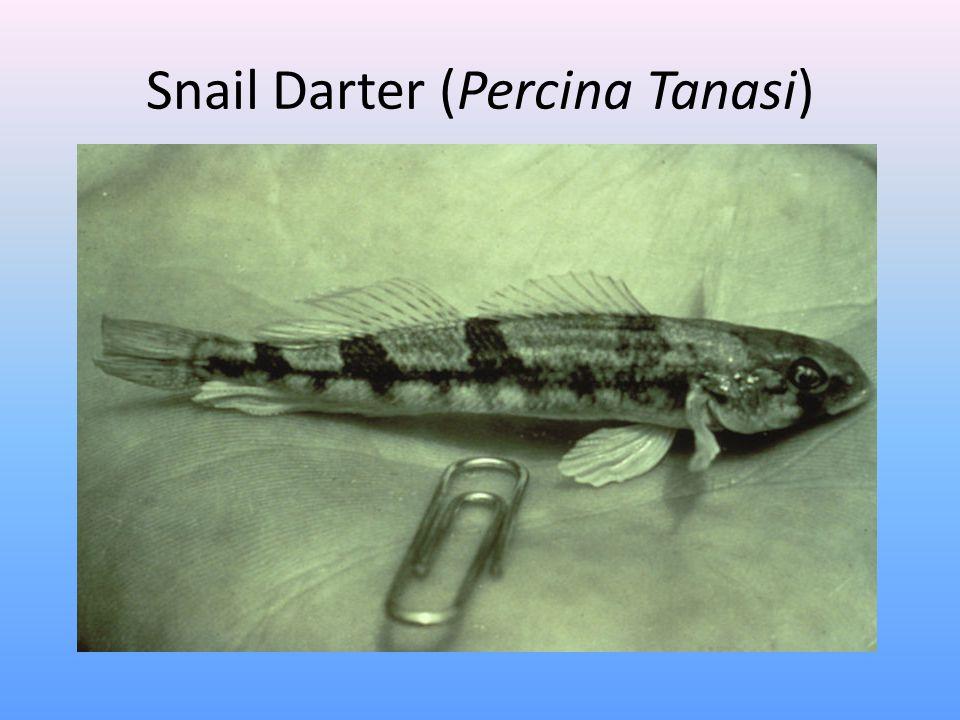 Snail Darter (Percina Tanasi)