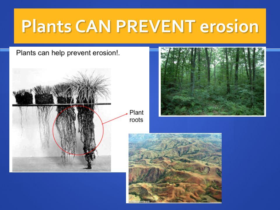 Plants CAN PREVENT erosion