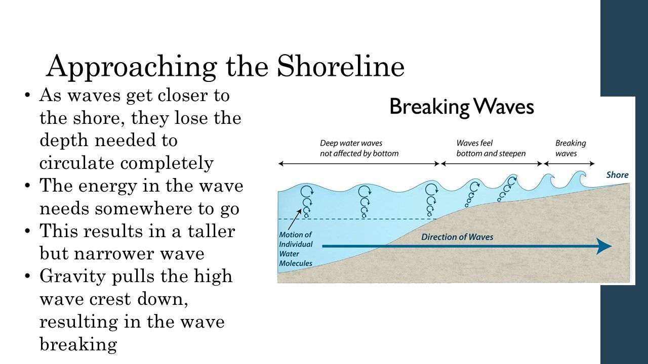 Approaching the Shoreline As waves get closer to the shore, they lose the depth needed to circulate completely The energy in the wave needs somewhere to go This results in a taller but narrower wave Gravity pulls the high wave crest down, resulting in the wave breaking