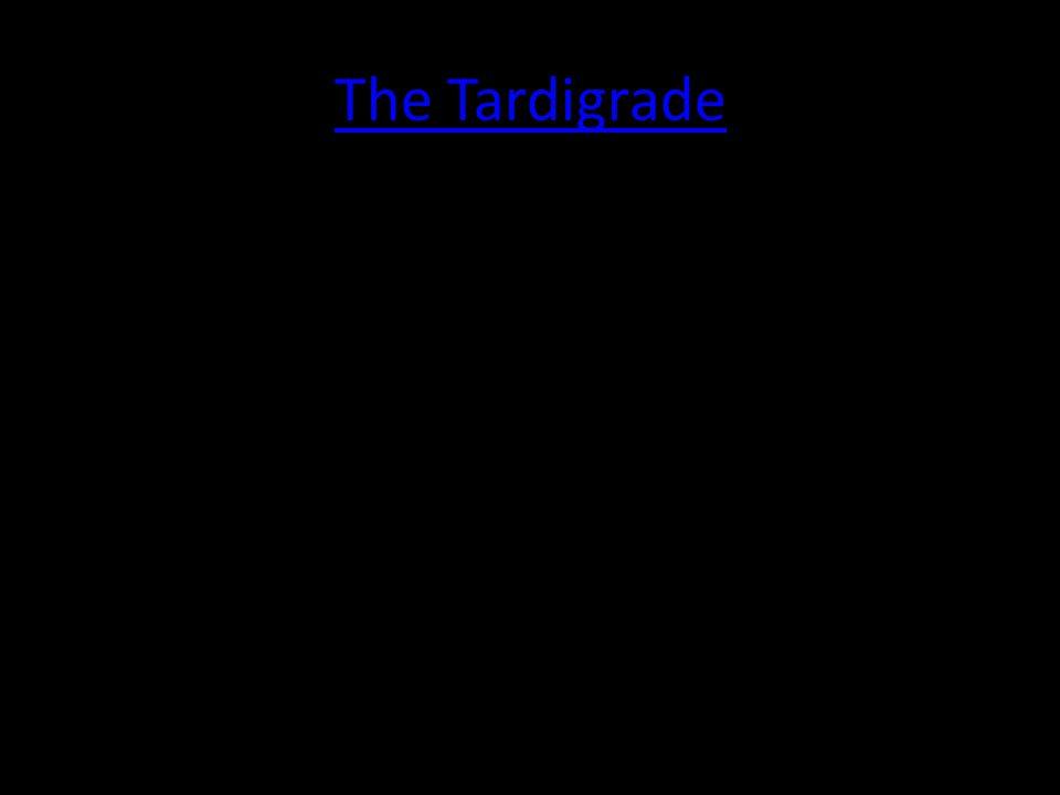 The Tardigrade