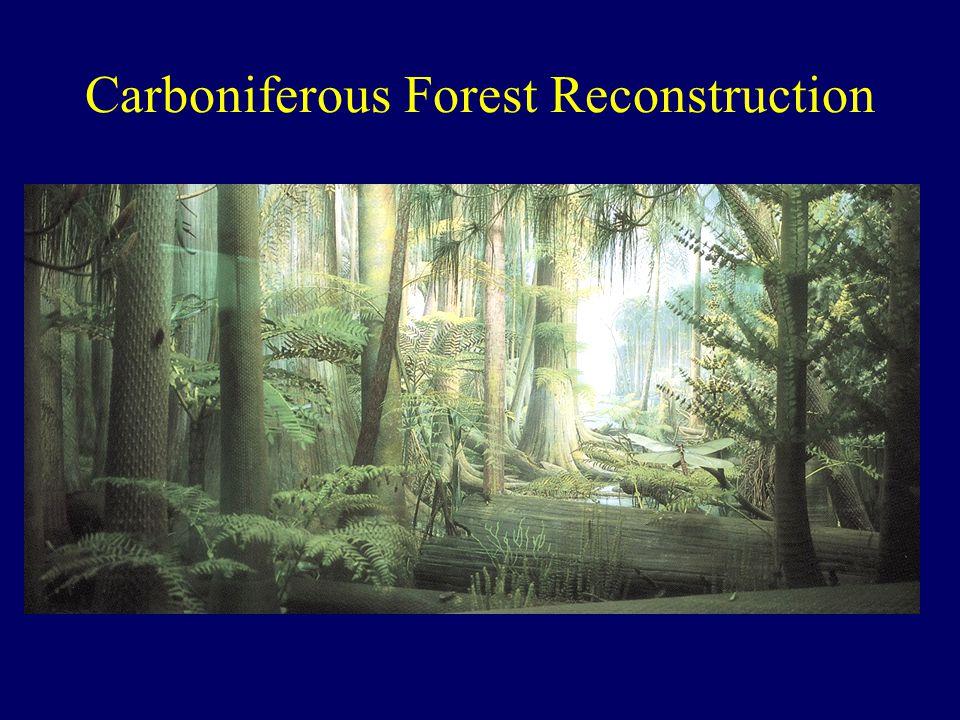 Carboniferous Forest Reconstruction