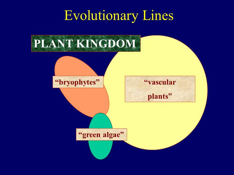 """Evolutionary Lines PLANT KINGDOM """"bryophytes""""""""vascular plants"""" """"green algae"""""""