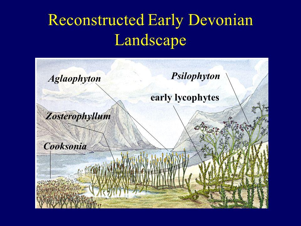 Reconstructed Early Devonian Landscape Cooksonia Aglaophyton Zosterophyllum early lycophytes Psilophyton