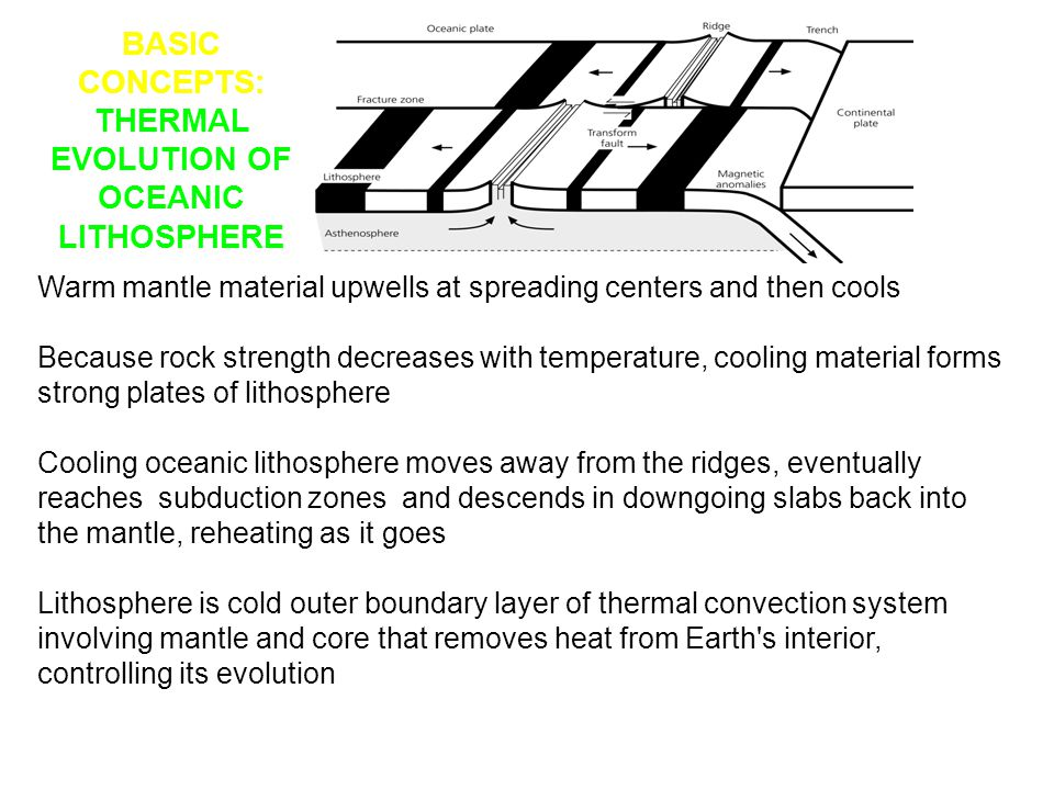 BASIC CONCEPTS: THERMAL EVOLUTION OF OCEANIC LITHOSPHERE Warm mantle material upwells at spreading centers and then cools Because rock strength decrea