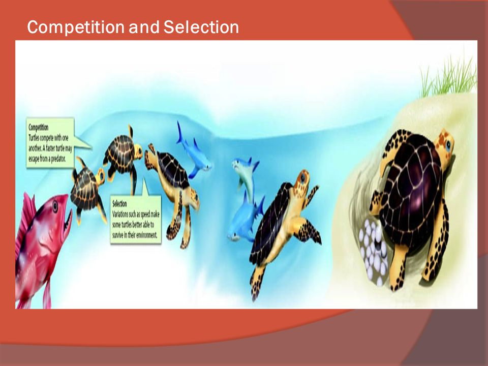 Competition and Selection