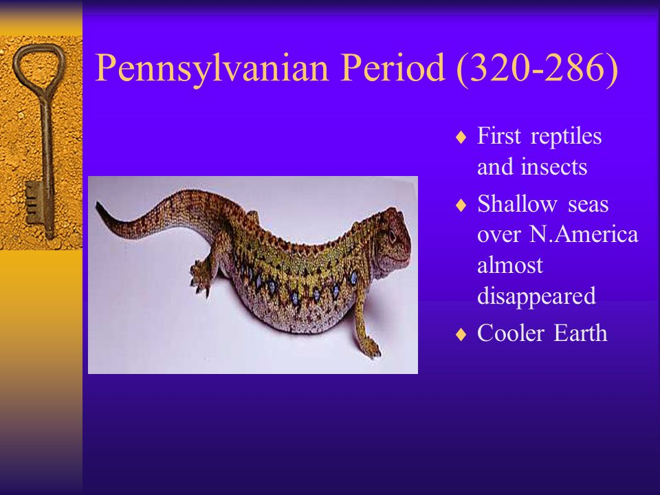 Pennsylvanian Period (320-286)  First reptiles and insects  Shallow seas over N.America almost disappeared  Cooler Earth