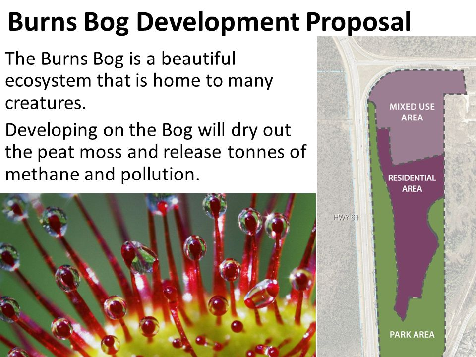 Burns Bog Development Proposal The Burns Bog is a beautiful ecosystem that is home to many creatures.