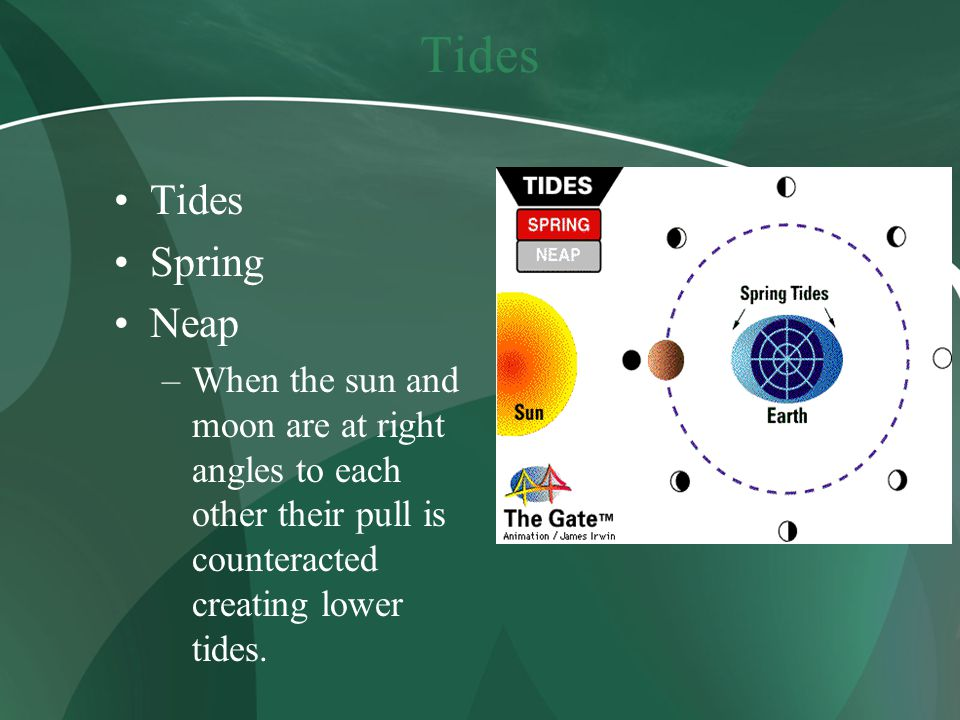 Tides Spring Neap –When the sun and moon are at right angles to each other their pull is counteracted creating lower tides.
