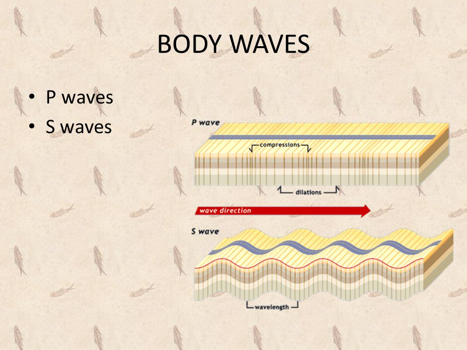 BODY WAVES P waves S waves