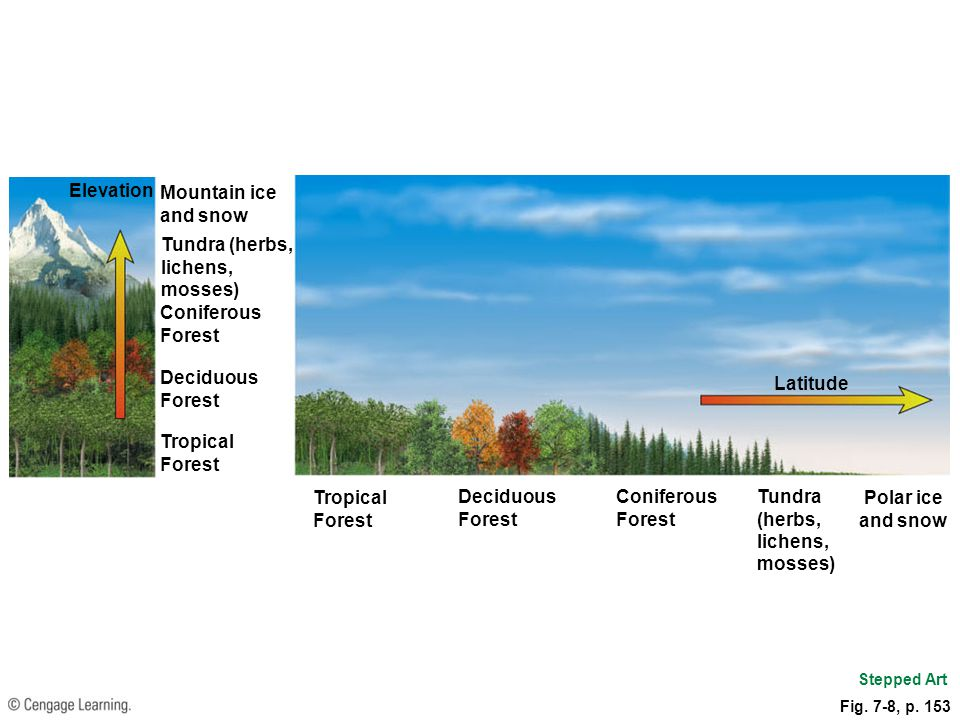 Latitude Tropical Forest Deciduous Forest Coniferous Forest Tundra (herbs, lichens, mosses) Polar ice and snow Elevation Mountain ice and snow Tundra
