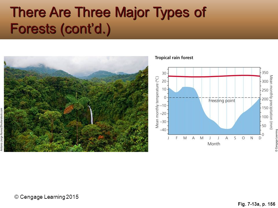 © Cengage Learning 2015 Fig. 7-13a, p. 156 There Are Three Major Types of Forests (cont'd.)