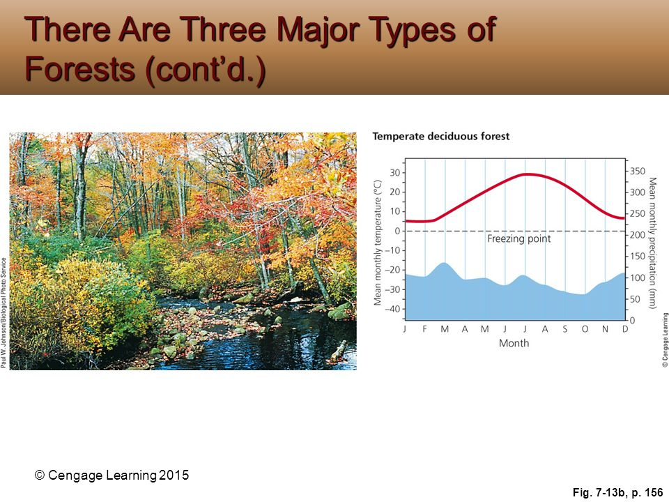 © Cengage Learning 2015 Fig. 7-13b, p. 156 There Are Three Major Types of Forests (cont'd.)