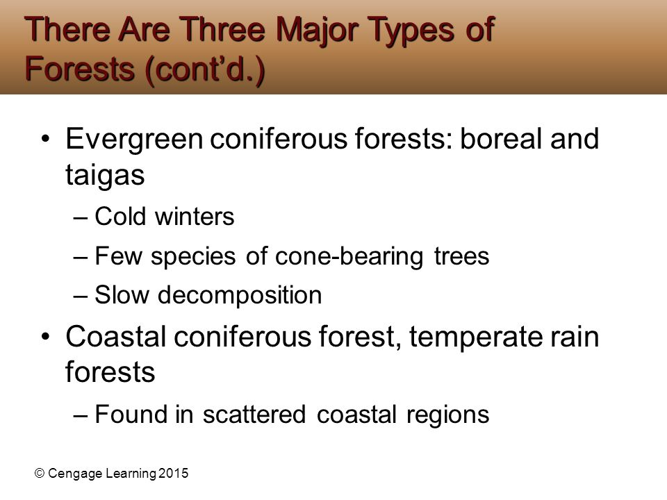 © Cengage Learning 2015 Evergreen coniferous forests: boreal and taigas –Cold winters –Few species of cone-bearing trees –Slow decomposition Coastal c
