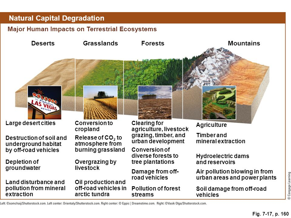 Fig. 7-17, p. 160 Natural Capital Degradation Major Human Impacts on Terrestrial Ecosystems DesertsGrasslandsForestsMountains Large desert citiesConve