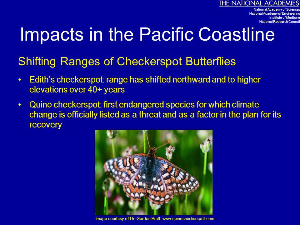 Impacts in the Pacific Coastline Shifting Ranges of Checkerspot Butterflies Edith's checkerspot: range has shifted northward and to higher elevations over 40+ years Quino checkerspot: first endangered species for which climate change is officially listed as a threat and as a factor in the plan for its recovery Image courtesy of Dr.