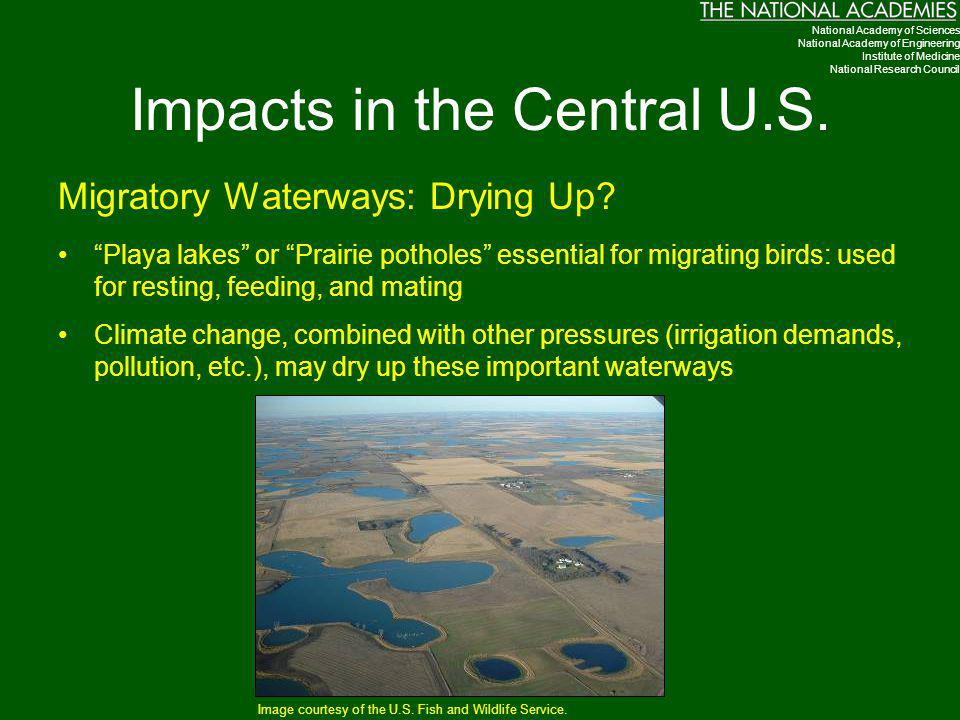 "Impacts in the Central U.S. Migratory Waterways: Drying Up? ""Playa lakes"" or ""Prairie potholes"" essential for migrating birds: used for resting, feedi"