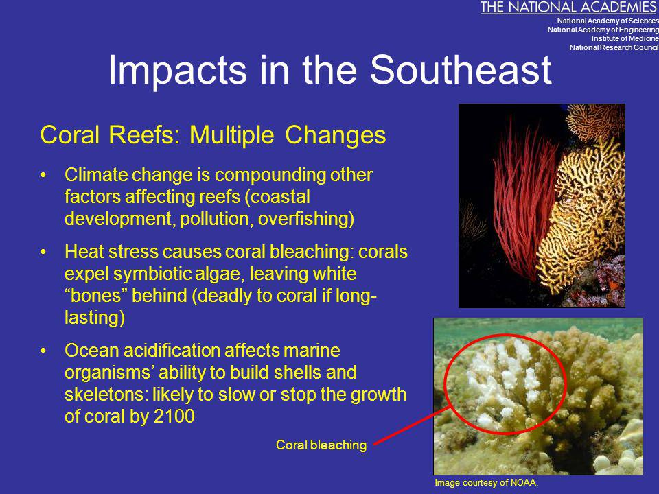 Impacts in the Southeast Coral Reefs: Multiple Changes Climate change is compounding other factors affecting reefs (coastal development, pollution, ov