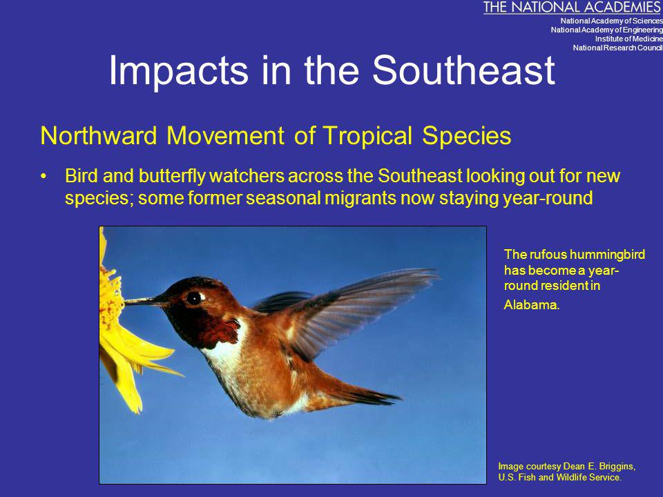 Impacts in the Southeast Northward Movement of Tropical Species Bird and butterfly watchers across the Southeast looking out for new species; some for
