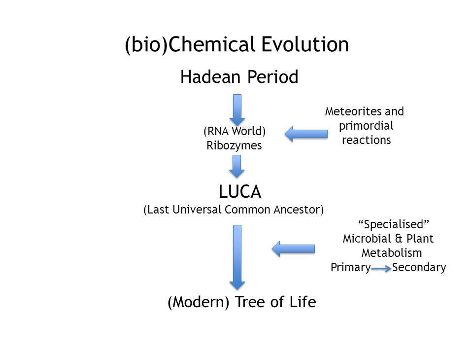 (bio)Chemical Evolution Hadean Period LUCA (Last Universal Common Ancestor) (Modern) Tree of Life (RNA World) Ribozymes Meteorites and primordial reactions Specialised Microbial & Plant Metabolism Primary Secondary