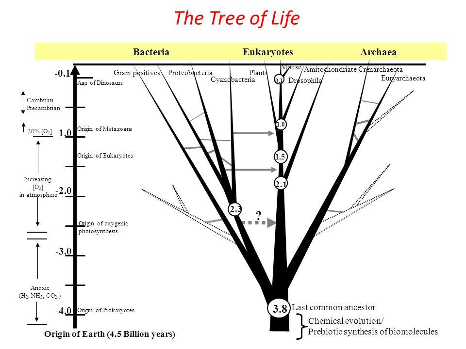 The Tree of Life -2.0 -4.0 -0.1 -3.0 Origin of Earth (4.5 Billion years) Last common ancestor 2.3 1.5 1.0 Proteobacteria Cyanobacteria Plants Drosophila Crenarchaeota Euryarchaeota Gram positives Mouse 0.1 .