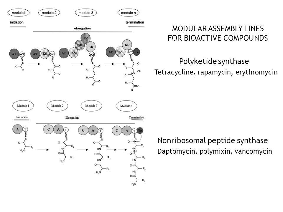 MODULAR ASSEMBLY LINES FOR BIOACTIVE COMPOUNDS Polyketide synthase Nonribosomal peptide synthase Tetracycline, rapamycin, erythromycin Daptomycin, polymixin, vancomycin