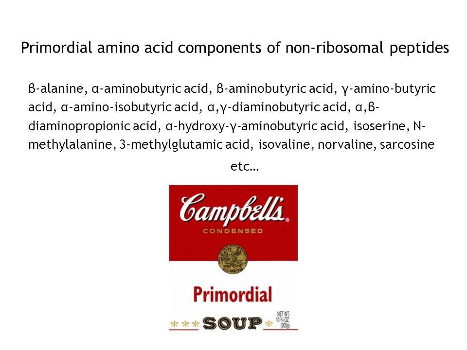 Primordial amino acid components of non-ribosomal peptides β-alanine, α-aminobutyric acid, β-aminobutyric acid, γ-amino-butyric acid, α-amino-isobutyric acid, α,γ-diaminobutyric acid, α,β- diaminopropionic acid, α-hydroxy-γ-aminobutyric acid, isoserine, N- methylalanine, 3-methylglutamic acid, isovaline, norvaline, sarcosine etc…