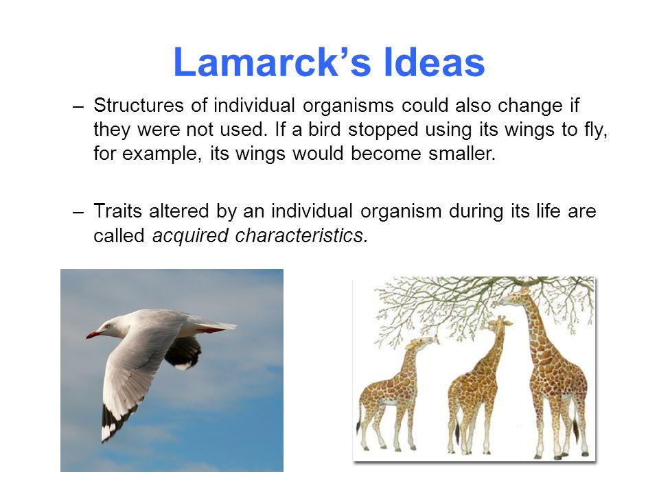 Lamarck's Ideas –Structures of individual organisms could also change if they were not used. If a bird stopped using its wings to fly, for example, it