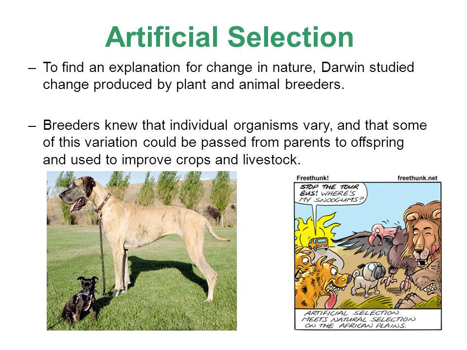 Artificial Selection –To find an explanation for change in nature, Darwin studied change produced by plant and animal breeders. –Breeders knew that in