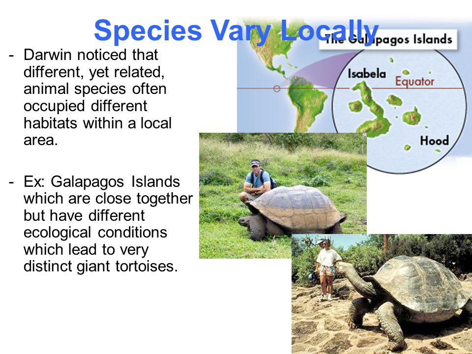 Species Vary Locally -Darwin noticed that different, yet related, animal species often occupied different habitats within a local area. -Ex: Galapagos