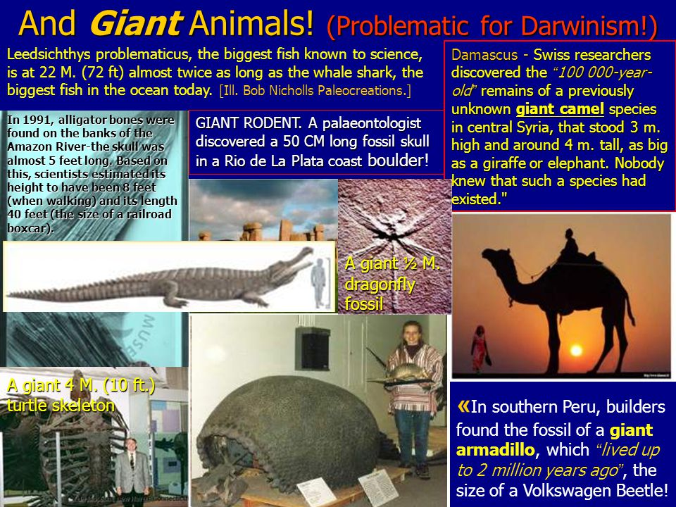 And Giant Animals. (Problematic for Darwinism!) GIANT RODENT.
