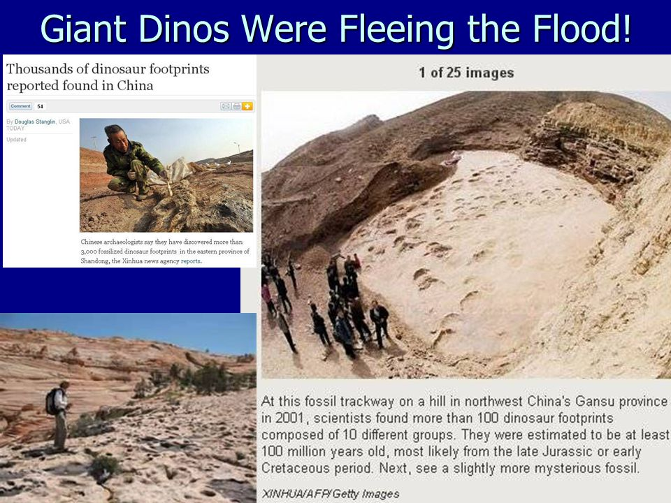 Giant Dinos Were Fleeing the Flood!