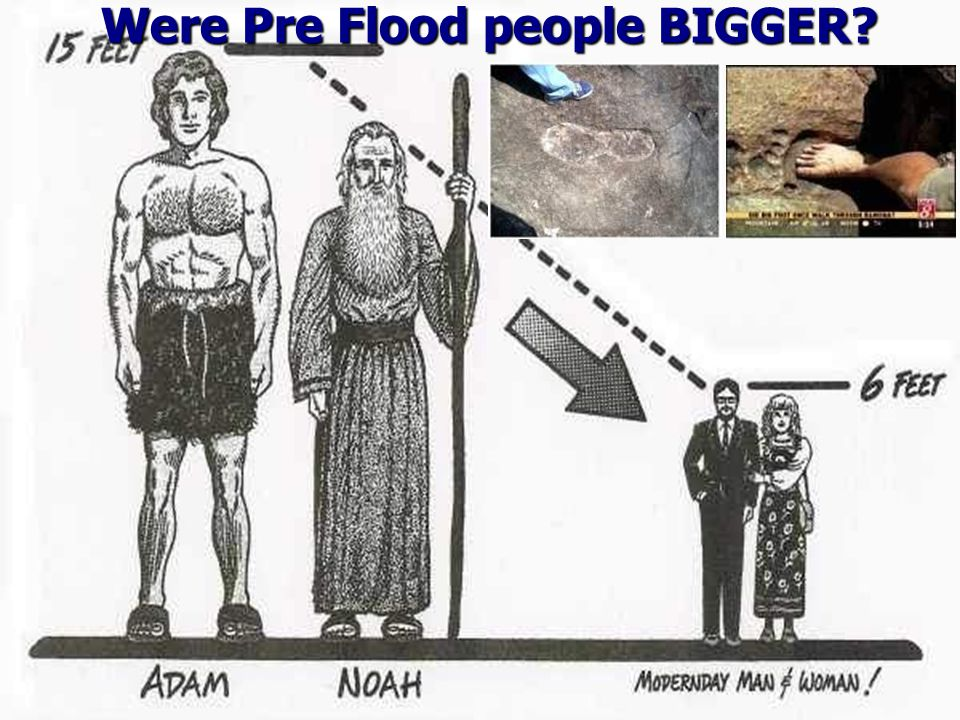 Were Pre Flood people BIGGER