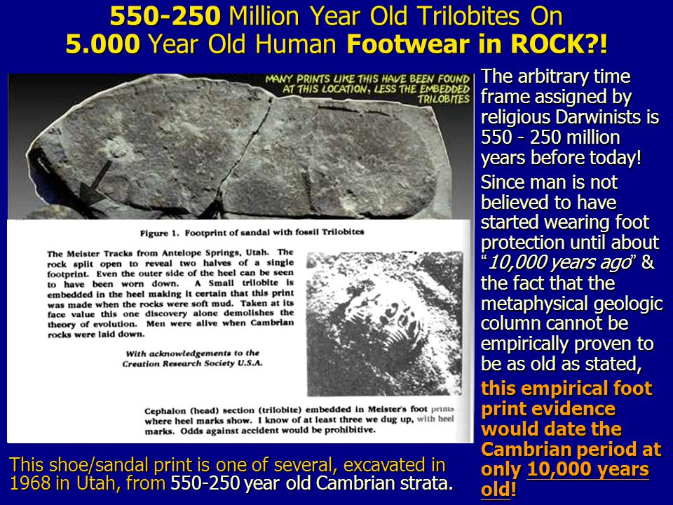 550-250 Million Year Old Trilobites On 5.000 Year Old Human Footwear in ROCK .