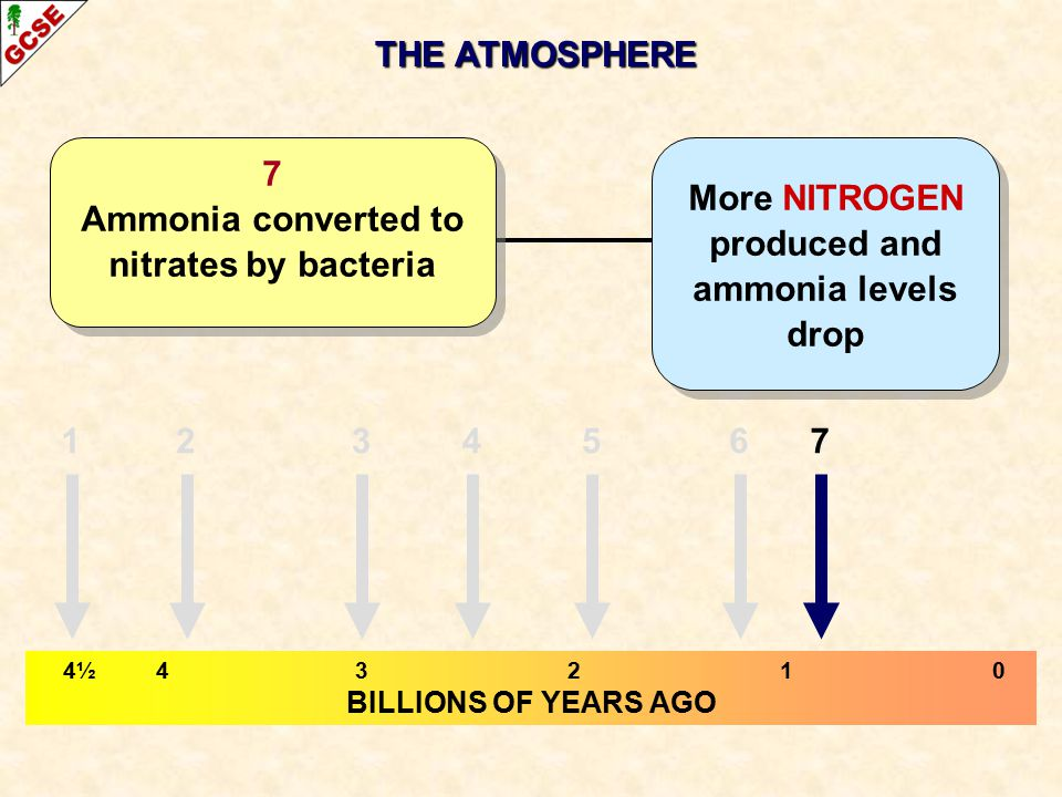THE ATMOSPHERE 4½ 43210 BILLIONS OF YEARS AGO More NITROGEN produced and ammonia levels drop 7 Ammonia converted to nitrates by bacteria 1234765