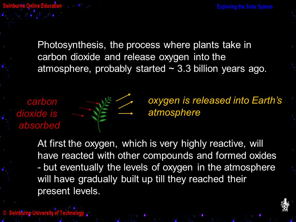Photosynthesis, the process where plants take in carbon dioxide and release oxygen into the atmosphere, probably started ~ 3.3 billion years ago.