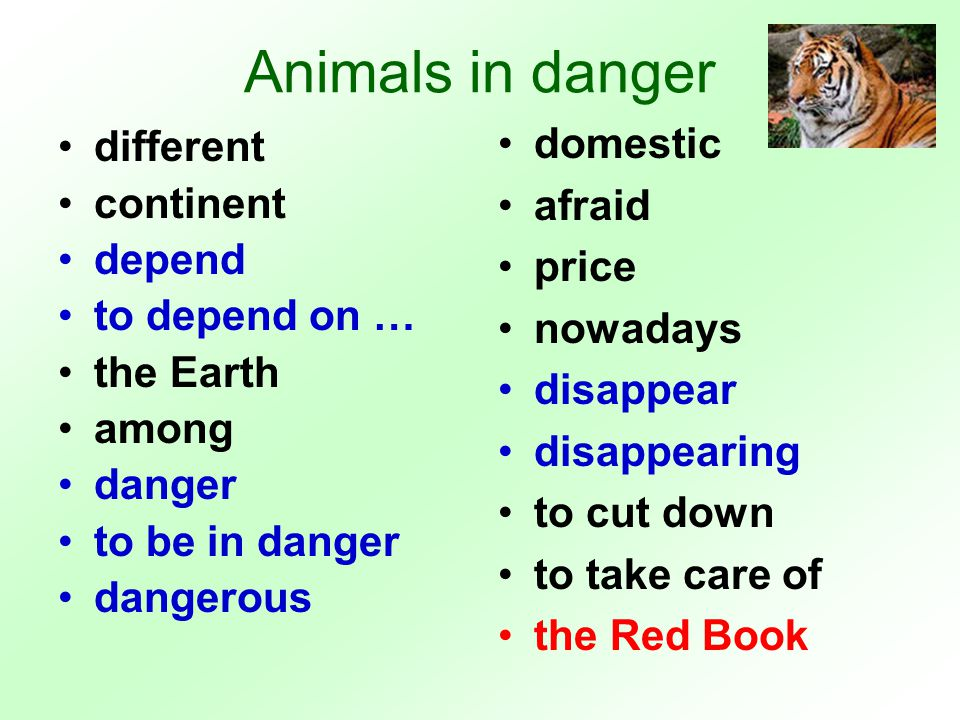 Animals in danger polar bears reindeer dolphins blue whales