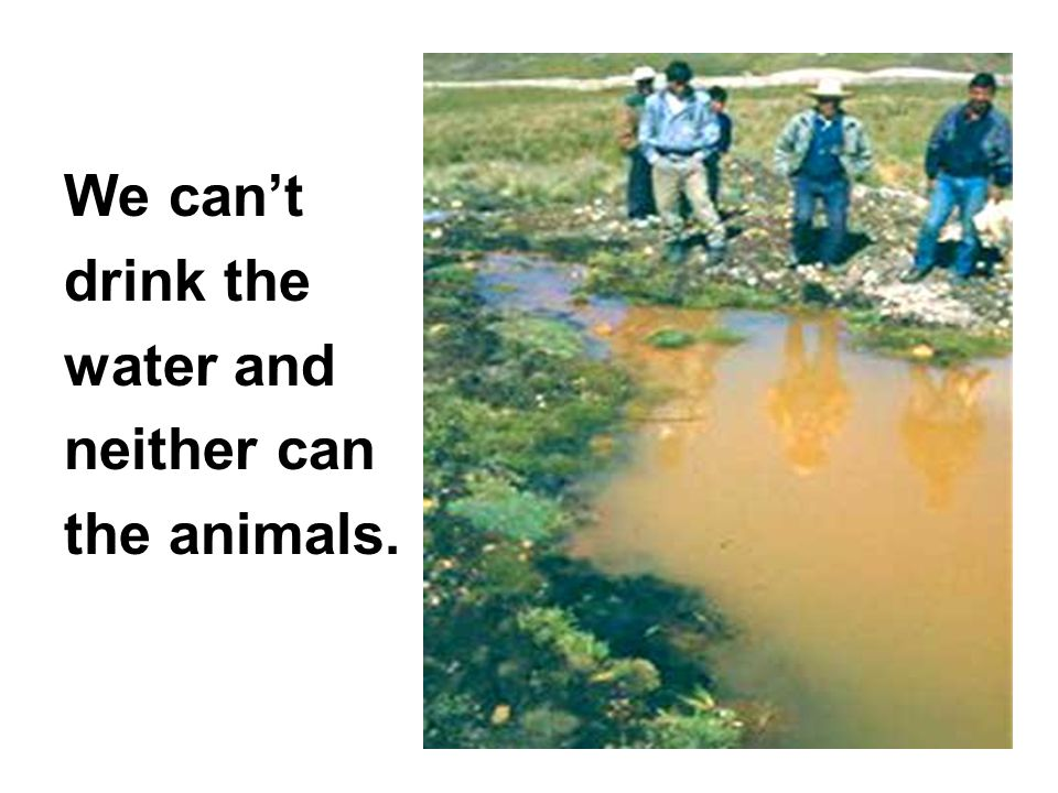 We can't drink the water and neither can the animals.