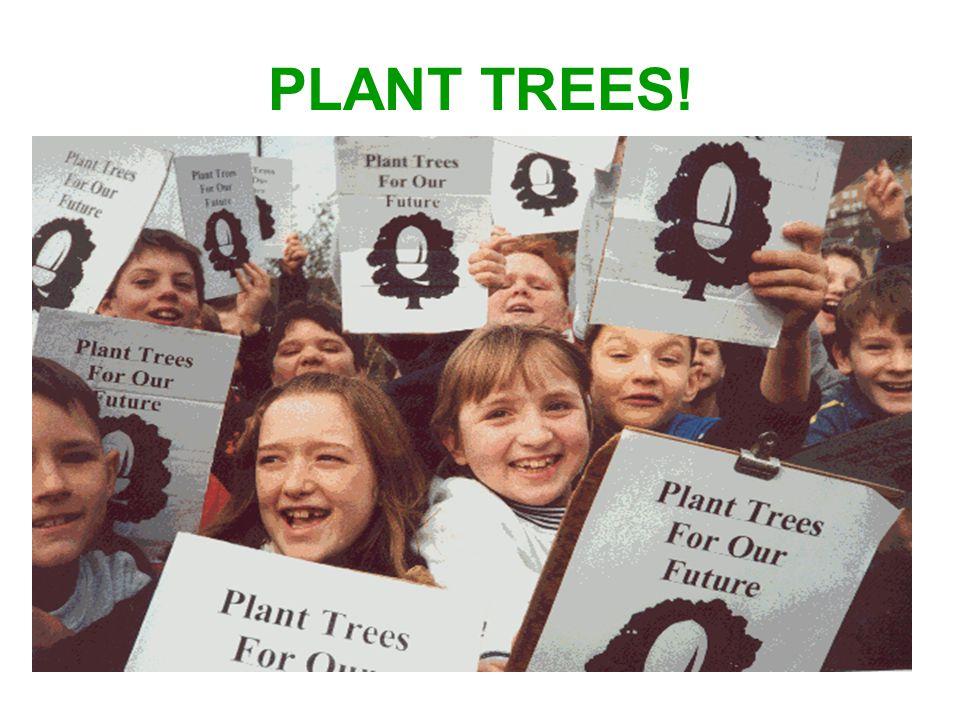 PLANT TREES!