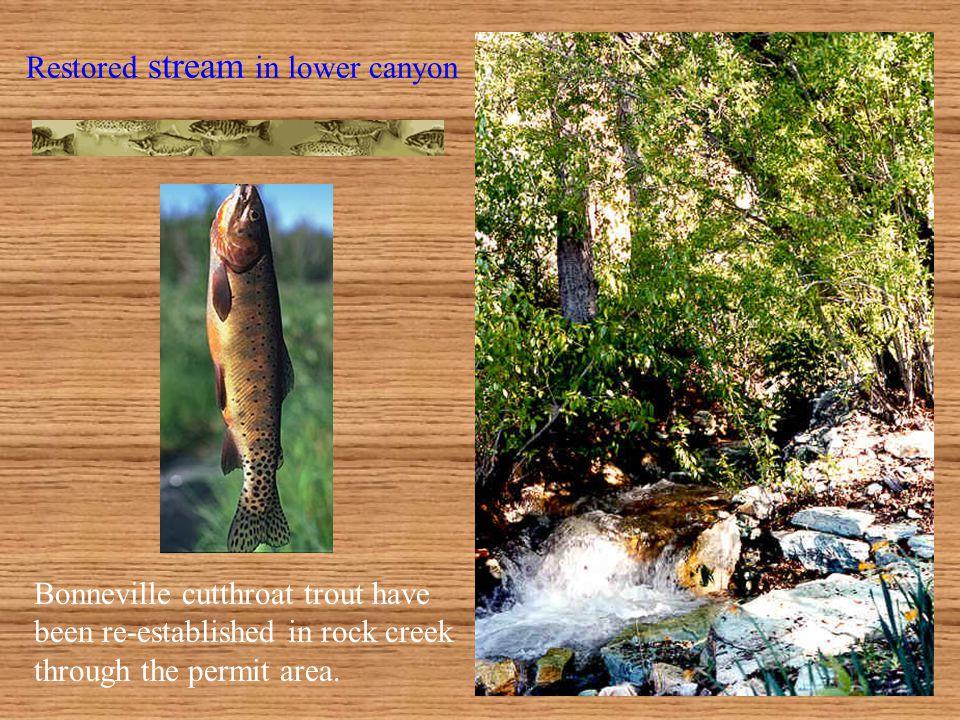 Lower Canyon Restoration Note cottonwood regeneration along stream.